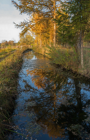 reflektion: small river with reflecting larch trees in autumnal colors Stock Photo