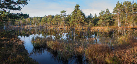 reflektion: moor lake wilderness with dead standing tree stems in the water, bavarian landscape Stock Photo
