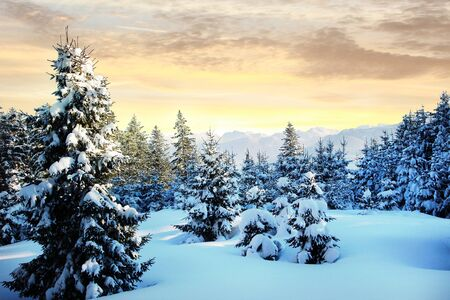 dreamy winter scenery with snowy forest and bright sunny morning sky