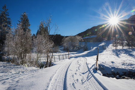 rhyme: pathway in dreamy winter wonderland on a bright sunny day in december