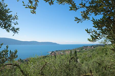 olive groves: mediterranean landscape with olive groves at the lake shore garda lake, view through branches