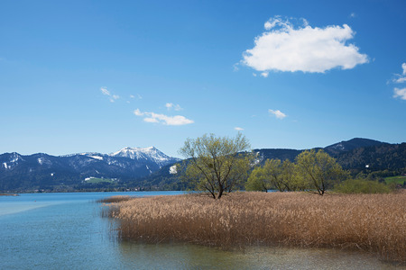 lake tegernsee in march, springtime landscape bavaria. shore with reed grass