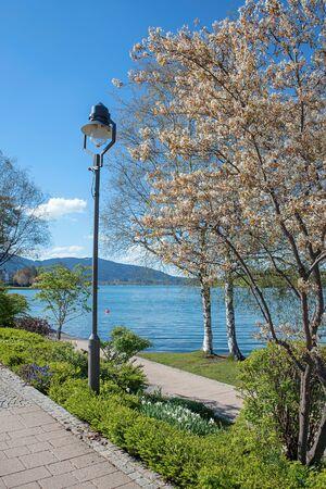 lakeside promenade tegernsee with blooming saskatoon tree and lantern