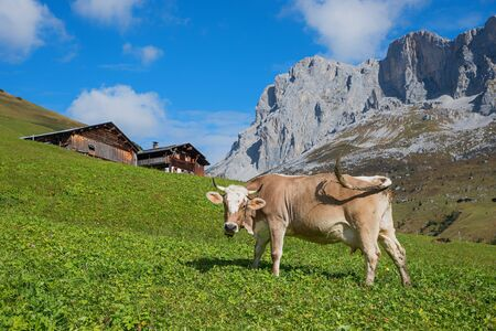 milker: swiss dairy cow on green pasture in alpine landscape with wooden cabins Stock Photo