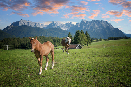 pasture with horses and karwendel mountain mass at sunset, upper bavaria Stock Photo