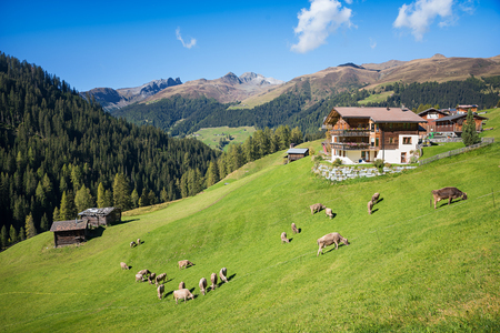meadowland: idyllic swiss landscape with cattle herd grazing on the hillside and farmstead. blue sky with clouds.
