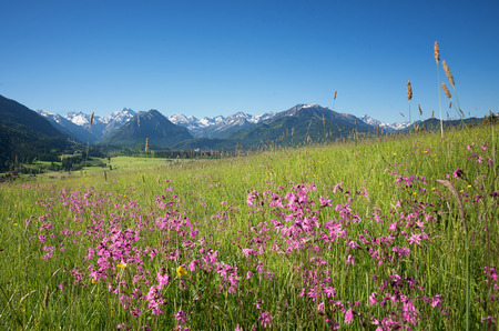 beautiful alpine landscape with red campions on the meadow, oberstdorf bavaria