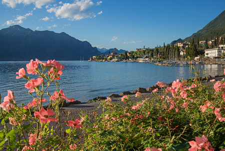 beautiful malcesine lakeside promenade garda lake with blooming roses and view to the old town