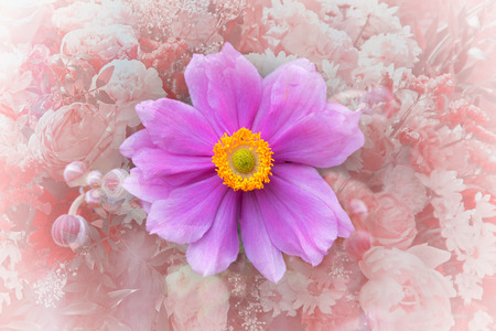 single blossom and buds of an anemone japonica perennial plant. floral frame texture pastel colored