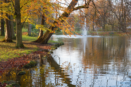 beech trees in autumnal colors, reflecting in pond, spa gardens bad aibling, upper bavaria