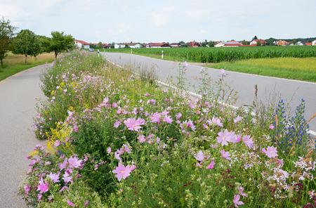 green space between rural road and bikeway, vegetated with bee-friendly wildflowers