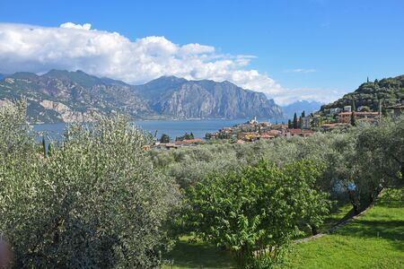 mediterranean landscape italy with view to garda lake and malcesine, green olive trees 免版税图像