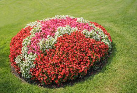 round colorful flowerbed with red pink and white begonias and green lawn background Archivio Fotografico