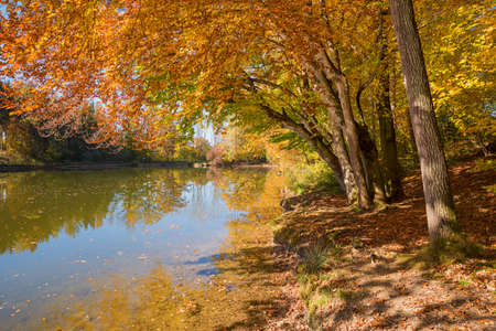 tranquil lake with wooden bench at the shore, autumnal landscape upper bavaria
