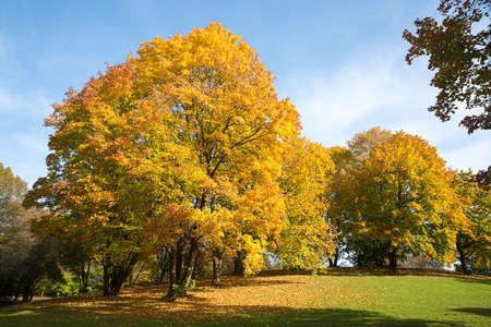 park landscape with beatiful trees in autumnal colors, Westpark Munich in october Standard-Bild
