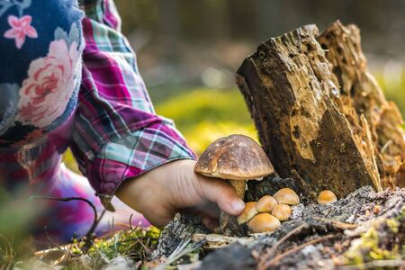 Close up of a girl picking a mushroom on wild forest background with grass, moss and sticks.