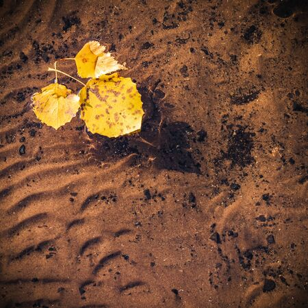 Yellowed leaves floating on the calm surface of the lake with a beautiful wavy bottom visible.