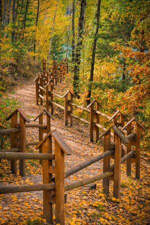 A forest road with wooden balustrades on a beautiful autumn day. Bad Muskau Park, Saxony, Germany.