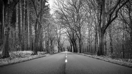 Straight empty asphalt road in the forest with trees on the sides. A European road during a dramatic cloudy winter day. Black and white conversion.