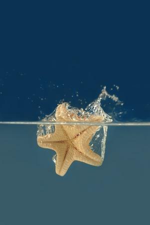 Starfish falling into a water photo