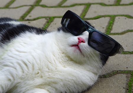 Portrait of funny cat with sunglasses photo