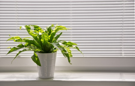 Green plant on the windowsill