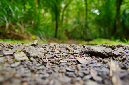 Close up view of the ground, blurred jungle in the background.