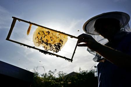 Schattenbild des Imkers gegen Sonne. Mann, der eine Honigwabe im Holzrahmen hält. Imkerei-Konzept. Standard-Bild - 91657089