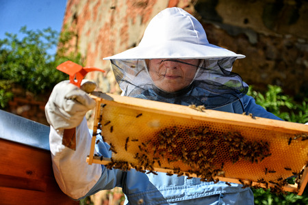 Woman beekeeper working with bees in apiary.  Stock fotó