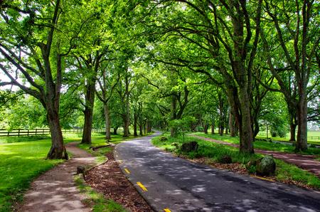 Entspannung in der Natur. In das Park-Konzept gehen. Schöne Aussicht auf grüne Bäume im Park. Standard-Bild - 92183186