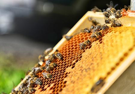 벌집에 꿀벌의 닫습니다. 맑은 날에 흐린 된 배경입니다. 양봉 개념입니다.