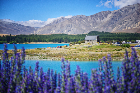 View of Church of the Good Shepherd and Lake Tekapo in New Zealand. Purple lupin flower in the foreground.