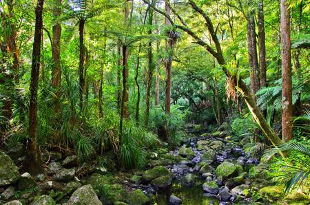 Blick auf Palmen im Regenwald . Exotischer Dschungelwald mit Palmen Standard-Bild - 95403181