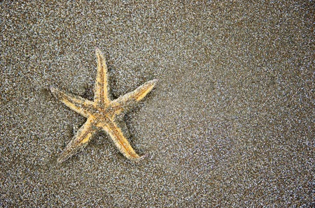 Close up of yellow starfish lying in the sand. Seashell on the sandy  beach.  Stock fotó