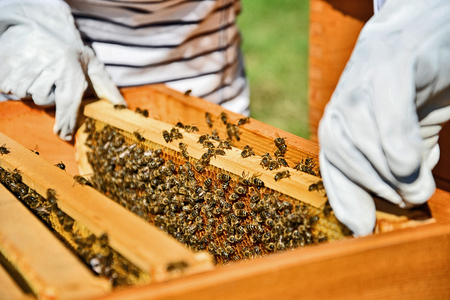 Woman beekeeper working with bees in apiary.  Standard-Bild