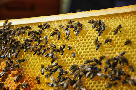 Queen bee surrounded by her workers. Close up of wooden frame with honeycomb and bees.   Stock fotó