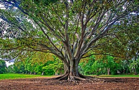 Blick auf schönen Baum im Park Standard-Bild - 95677644