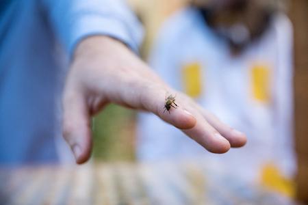 Nahaufnahme der Hand des Mannes und einer Biene darauf. Imkerei-Konzept. Standard-Bild