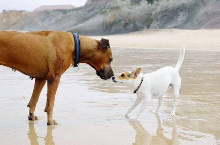 Small and big dog friends are playing on the beach. Dog love concept.