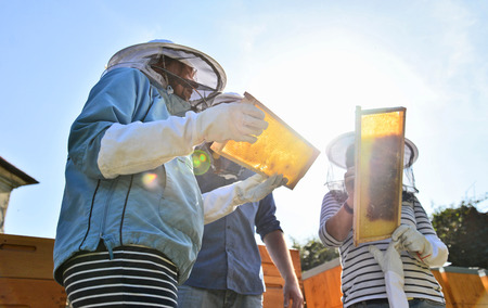 Beekeepers working with the honeycombs next to beehives in the apiary. Imagens