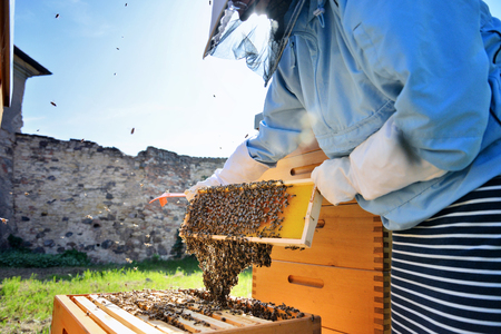 Female beekeeper working with bees in the apiary. Beekeeping.
