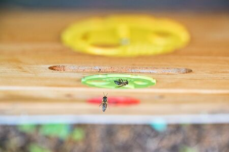Top view of bee and wooden beehive. Blurred background. Beekeeping concept.
