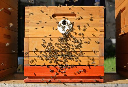 Front view of wooden beehive. Bees flying around. Beekeeping concept. Imagens
