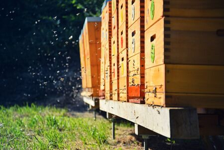Bees flying around beehive. Beekeeping concept. Wooden beehives in the garden. Threat of bees extinction. Imagens