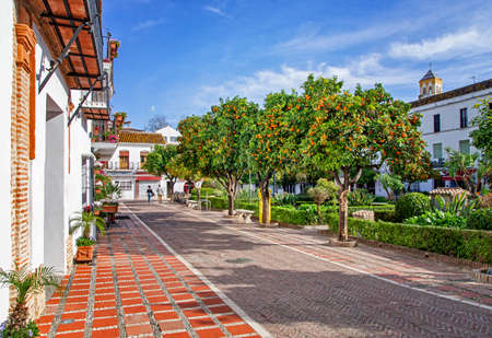 View of beautiful orange trees in Marbella, blue sky in the background. Orange trees in the city. Plaza de los Naranjos, Marbella, Spain.