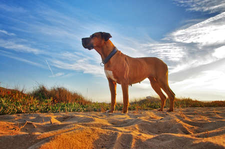 Dog portrait. Brown dog on the sandy beach. Travel with pet concept.