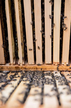 Close up of bees on the wooden frame from beehive. Apiary and beekeeping concept.
