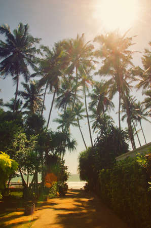 S. K. Town, Sri Lanka, Surfing spot in Sri Lanka. Vew of the pathway, palmtrees and beach in the background. Standard-Bild