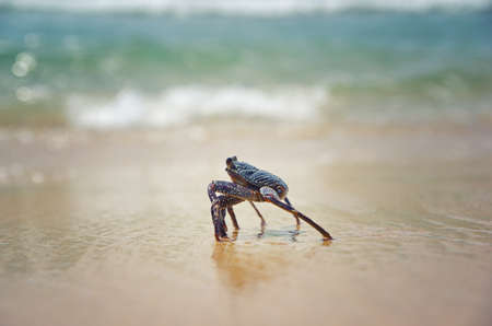 Close up of a crab in the sand. Beach life. Sea animal. Sunny day on the beach.
