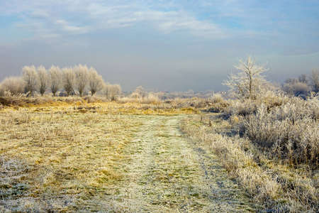 Trees and meadow covered by hoarfrost against a blue sky